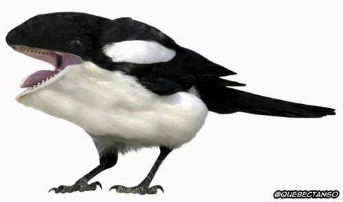 14-Magpie-and-Orca-a-Magporca-Graphics-Designer-Digital-Taxidermist-Animangler-www-designstack-co