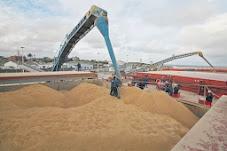 Precios Cámara Arbitral de Cereales de Rosario