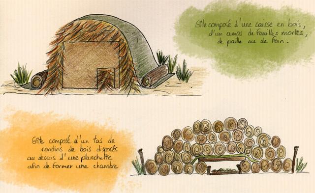 L 39 atelier wild garden un abri h risson - J ai trouve un herisson dans mon jardin que faire ...
