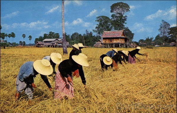 http://www.bangkokpost.com/news/general/503368/commerce-delays-third-rice-auction