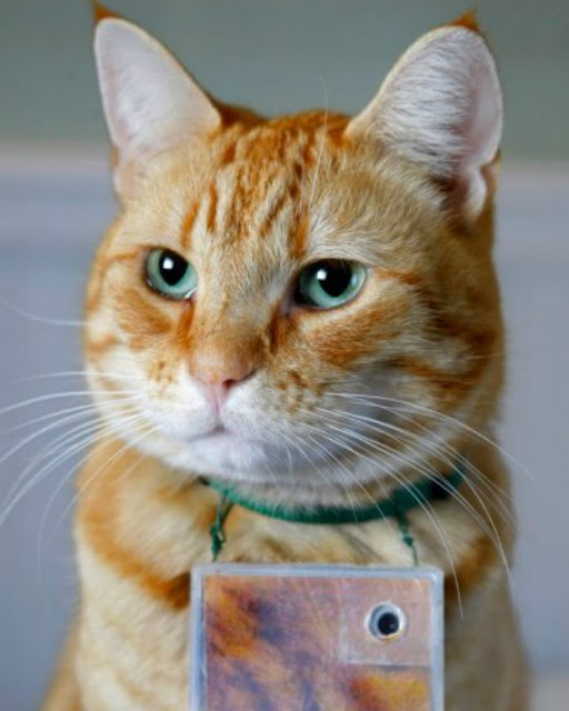 3 Most Famous Internet Cats