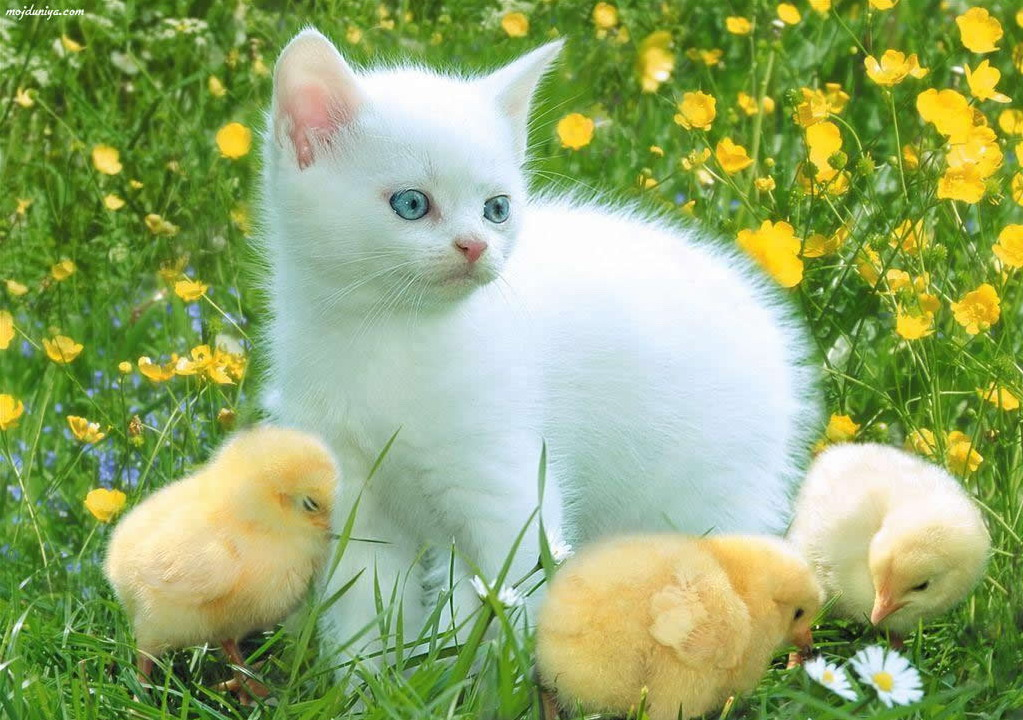 really cute animals amazing wallpapers