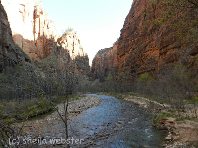 The river flowing down the canyon in the shade.