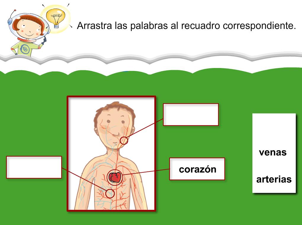 http://www.primerodecarlos.com/SEGUNDO_PRIMARIA/julio/activi_bromera/natura2/2/NATURA2-U2-A5_cas.swf