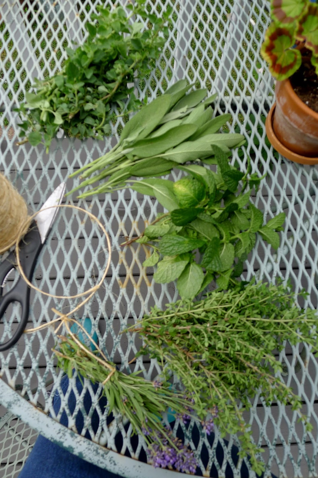 Drying fresh herbs, preserving