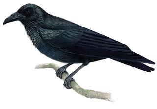 Guía de Aves de Coahuila, Museo de las Aves de México