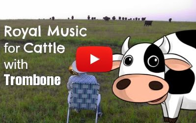 royal music for cattle by farmer Derek with a trombone goes viral via geniushowto.blogspot.com videos
