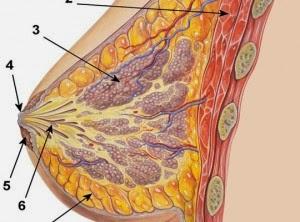Thực phẩm phòng ngừa bệnh ung thư vú