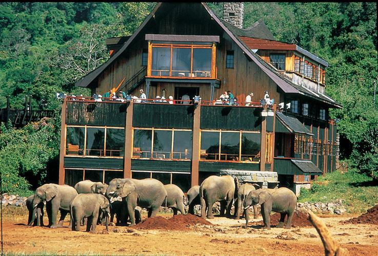 Queen Elizabeth Forest Park Hotels
