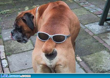Funny+orkut+scraps+funny+dog+pictures+specs.jpg