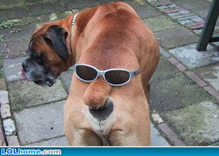 funny dog-17