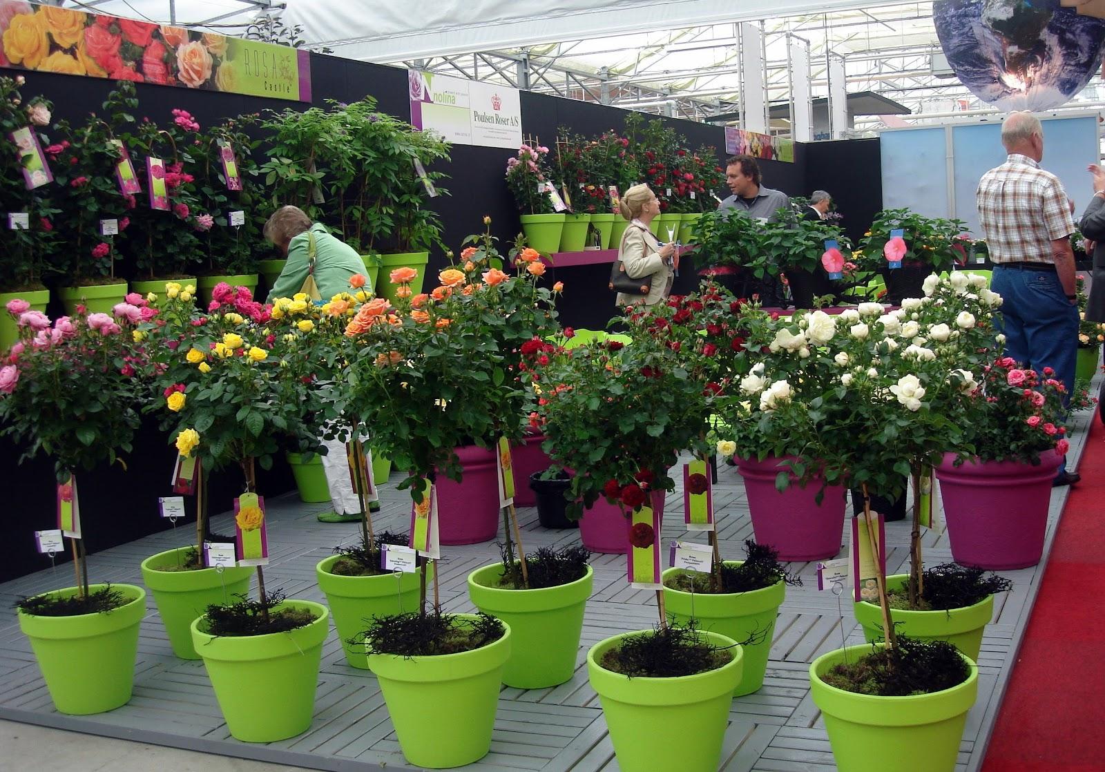 Thm tecnolog as de la horticultura mediterr nea qu for Plantas de vivero