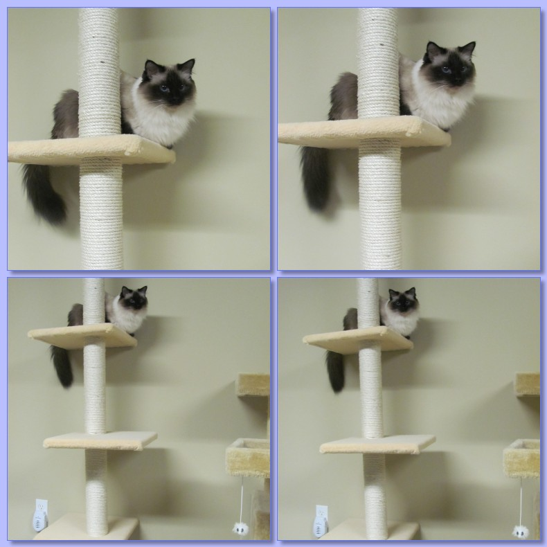 cat tree wallpaper