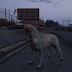 GTA V խաղում հնարավոր է խաղալ որպես կատու, շուն, խոզ, դելֆին, հավ, եղնիկ, կով և այլն