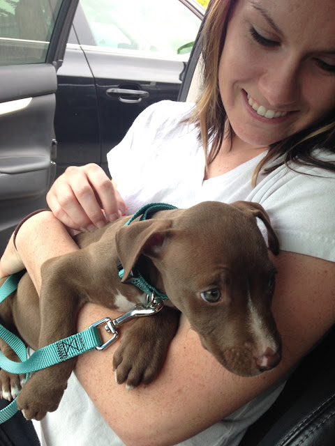 pit bull puppy adopted