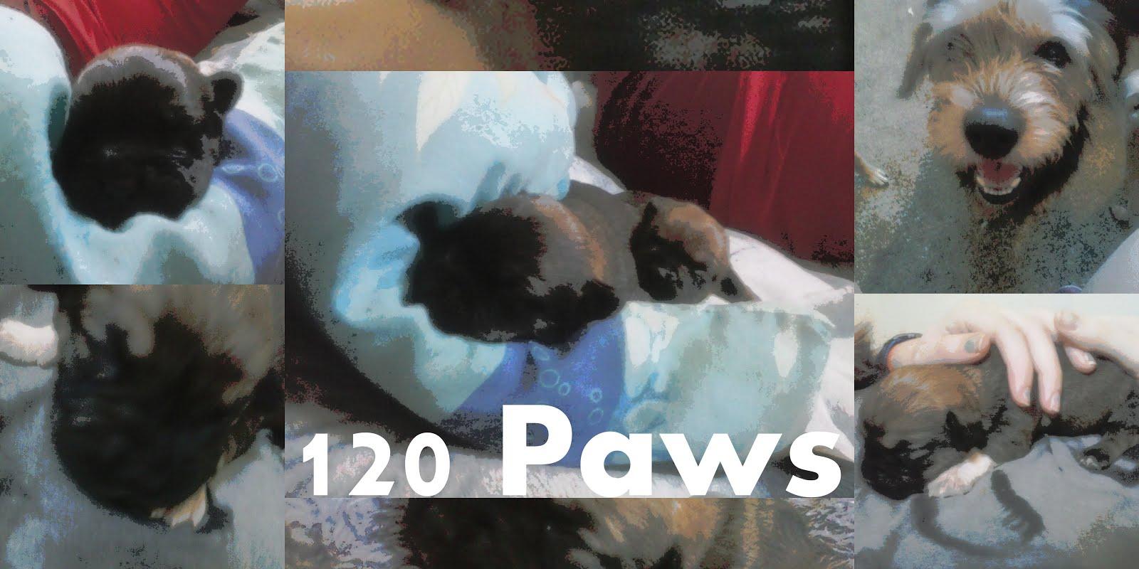 120 Paws