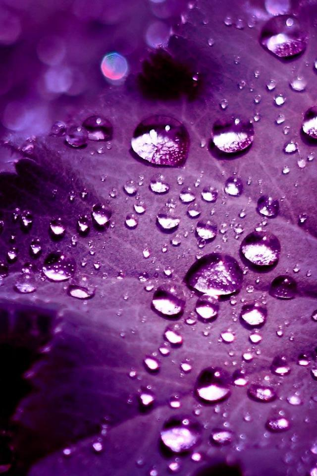 Iphone+4s+Drops+on+Purple En Güzel İphone 4s Resimleri