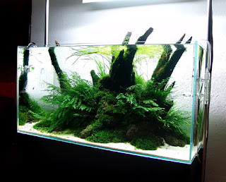planted aquarium, water garden, the green machine, pond supplies, iwagumi, cara membuat aquascape, garden pond, harga aquarium, backyard ponds, online fish store, freshwater aquarium plants, live aquarium plants, aquascapes, aquascape indonesia, cara membuat aquarium, pond design, water feature pumps, pond ideas, tanaman aquascape, jual aquarium, aquascapeonline,