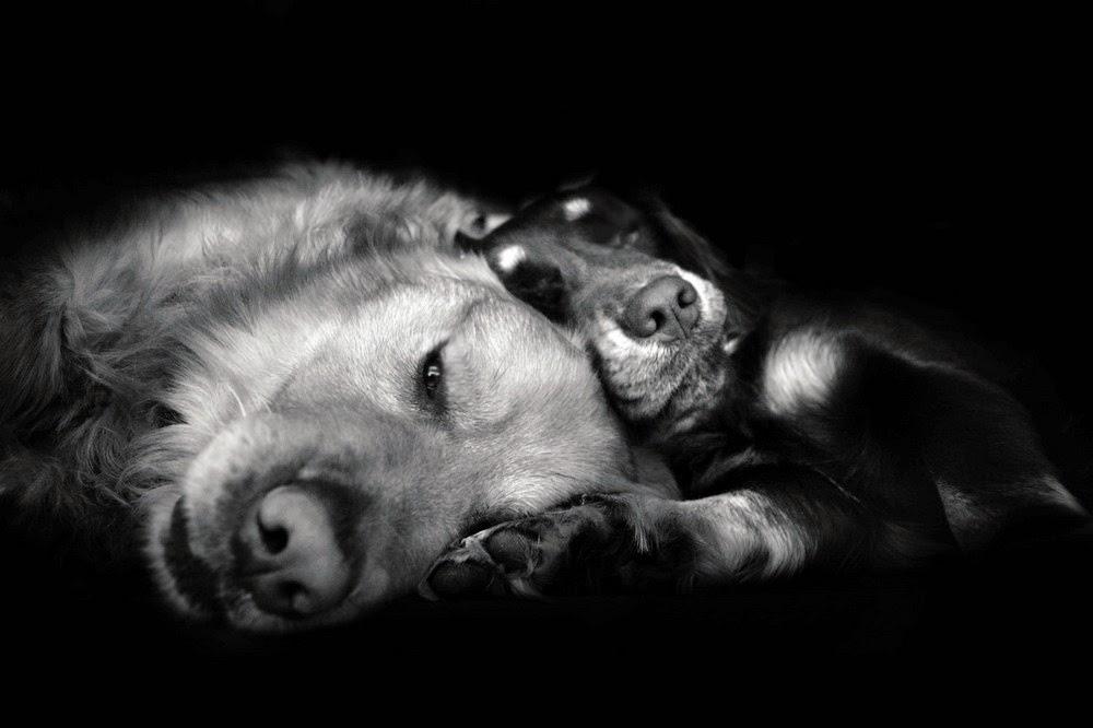 Ảnh đẹp chụp những chú Chó đáng yêu