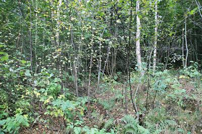Skog økosystem