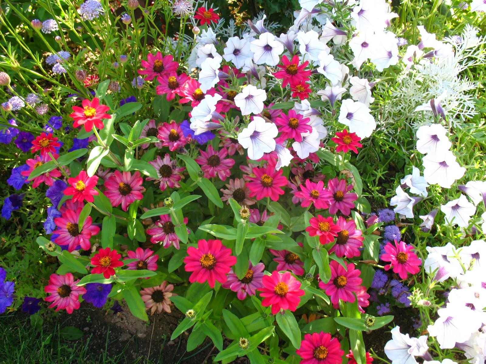 Plantes pour bordures fleuries for Fleur pour jardin