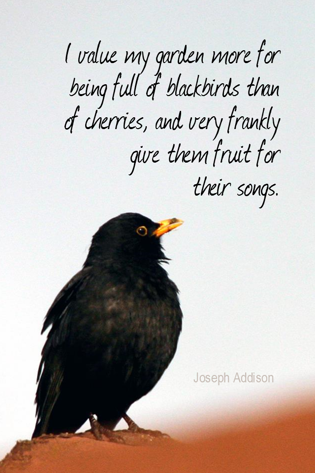 visual quote - image quotation for PERSPECTIVE - I value my garden more for being full of blackbirds than of cherries, and very frankly give them fruit for their songs. - Joseph Addison