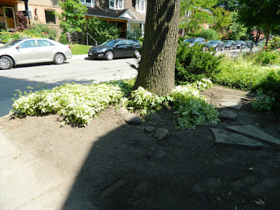 Front garden cleanup Leslieville after Paul Jung Gardening Services