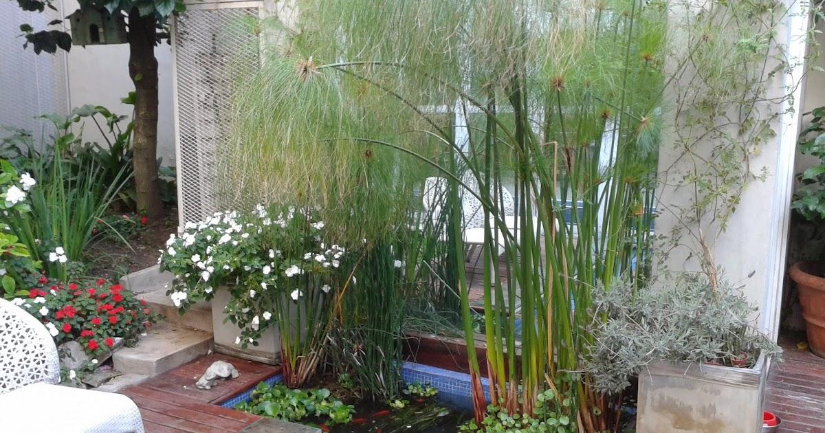 Acuarios decorpez estanques de patio for Estanque decorativo