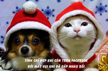 Những lời chúc - hình ảnh chế Giáng sinh-Noel hài hước và ý nghĩa