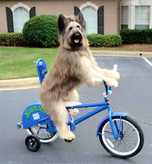 Dog rides new blue bike