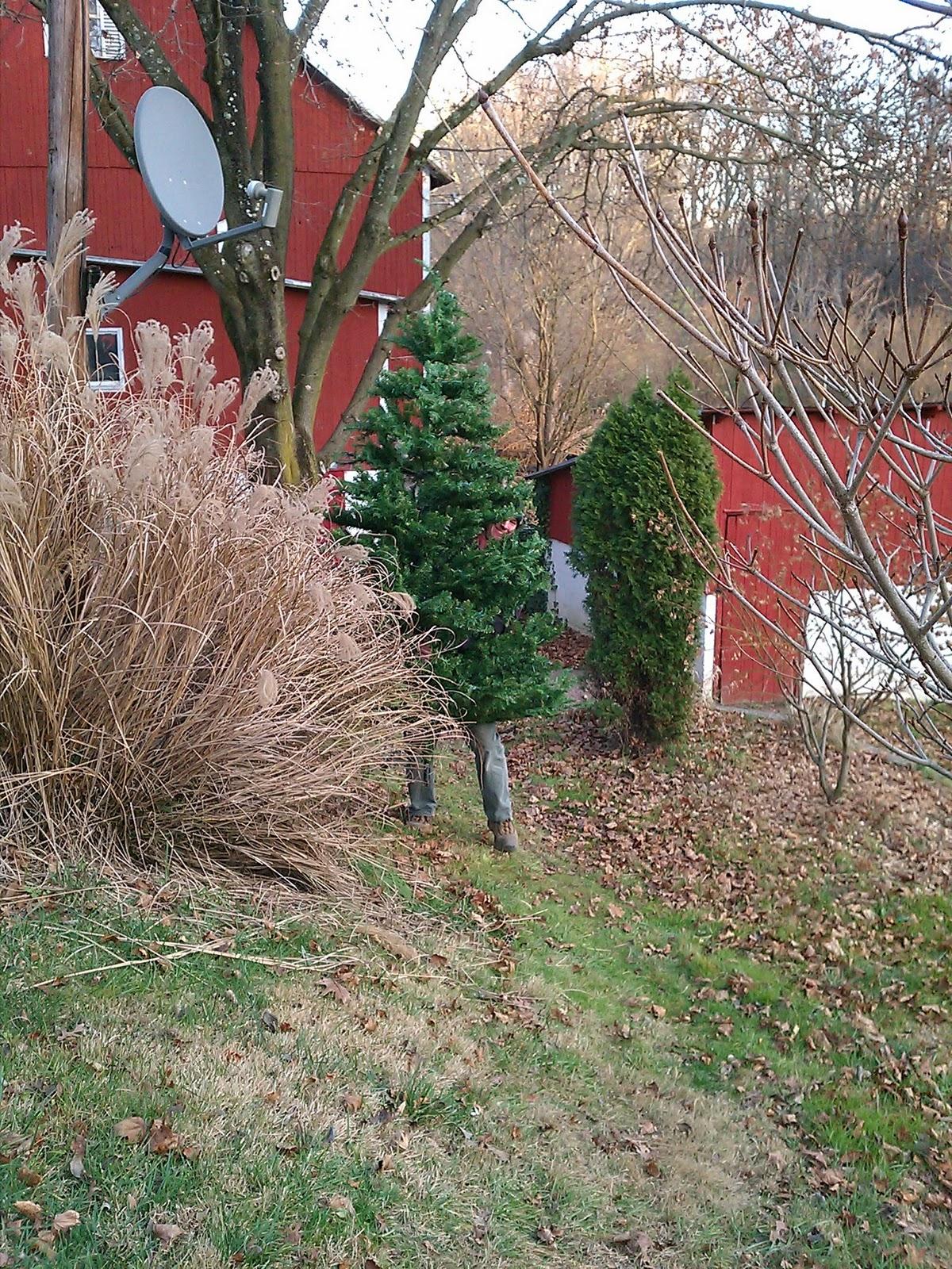 Meadow Creek Farm December 2011