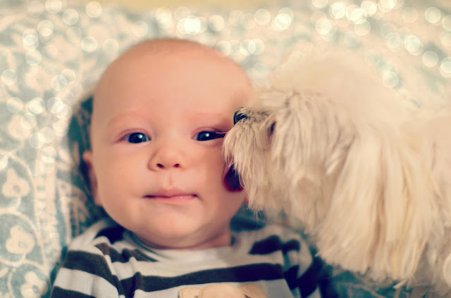 puppy kissing baby boy cute picture