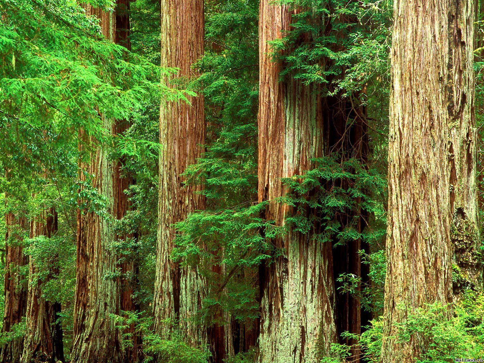 Տավուշի մարզում ապօրինի հատվել են 182 ծառեր