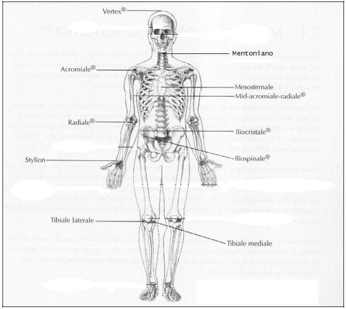 Prácticas en Composición Corporal: Práctica 1 (12/02/13): Toma ...