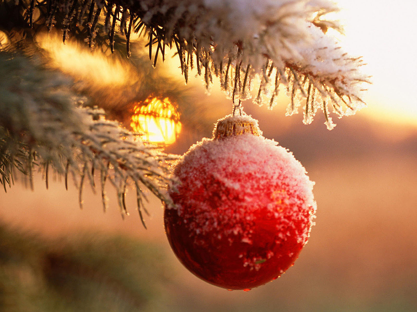Christmas Tree For Table
