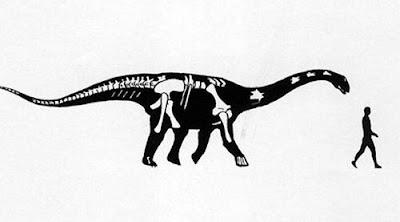 Rinconsaurus