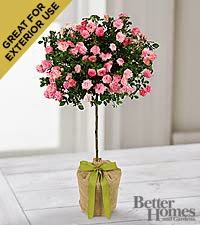 The FTD  Gratitude and Grace for Mom Rose Topiary by Better Homes and Gardens