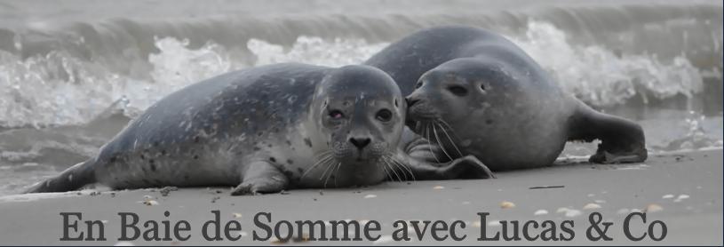 Les phoques et la Baie de Somme avec Lucas.