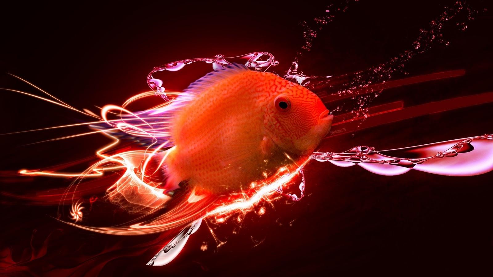 http://1.bp.blogspot.com/-V1ORPKefrD4/Tsuy5IbSHII/AAAAAAAAWwo/Dd_46X_Y3Uc/s1600/oranda-goldfish-1920x1080.jpg