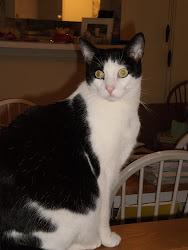 Hannah Cat