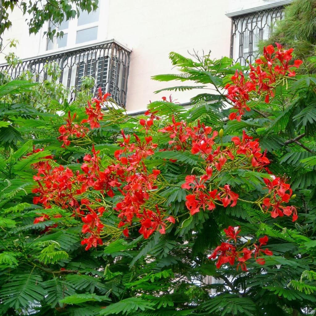 Eph m res la flore de cadix suite et fin - Arbres a fleurs rouges ...