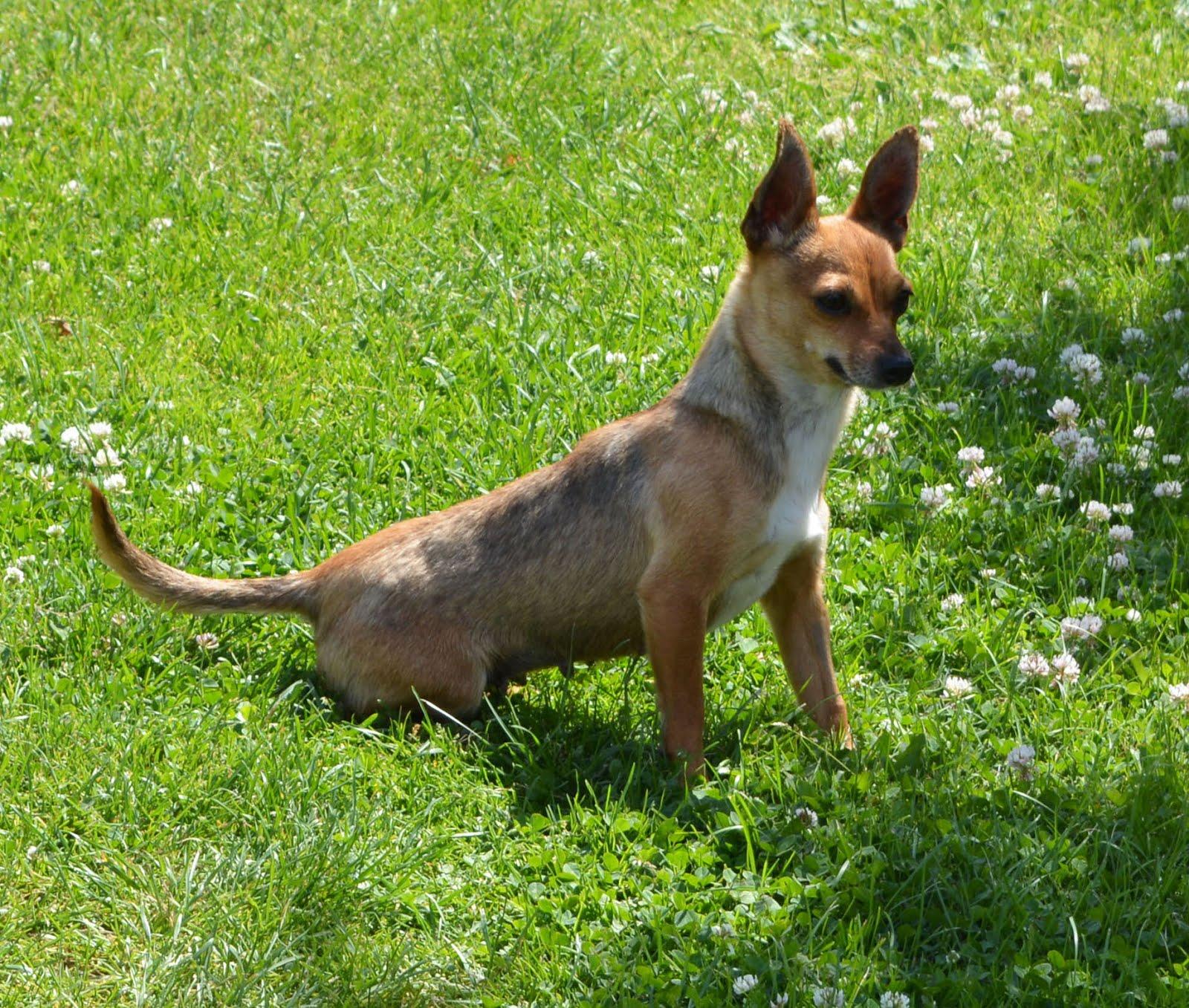 Maja adoptowana czerwiec 2015