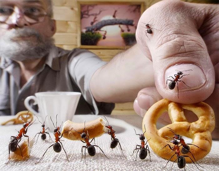 hormigas reales