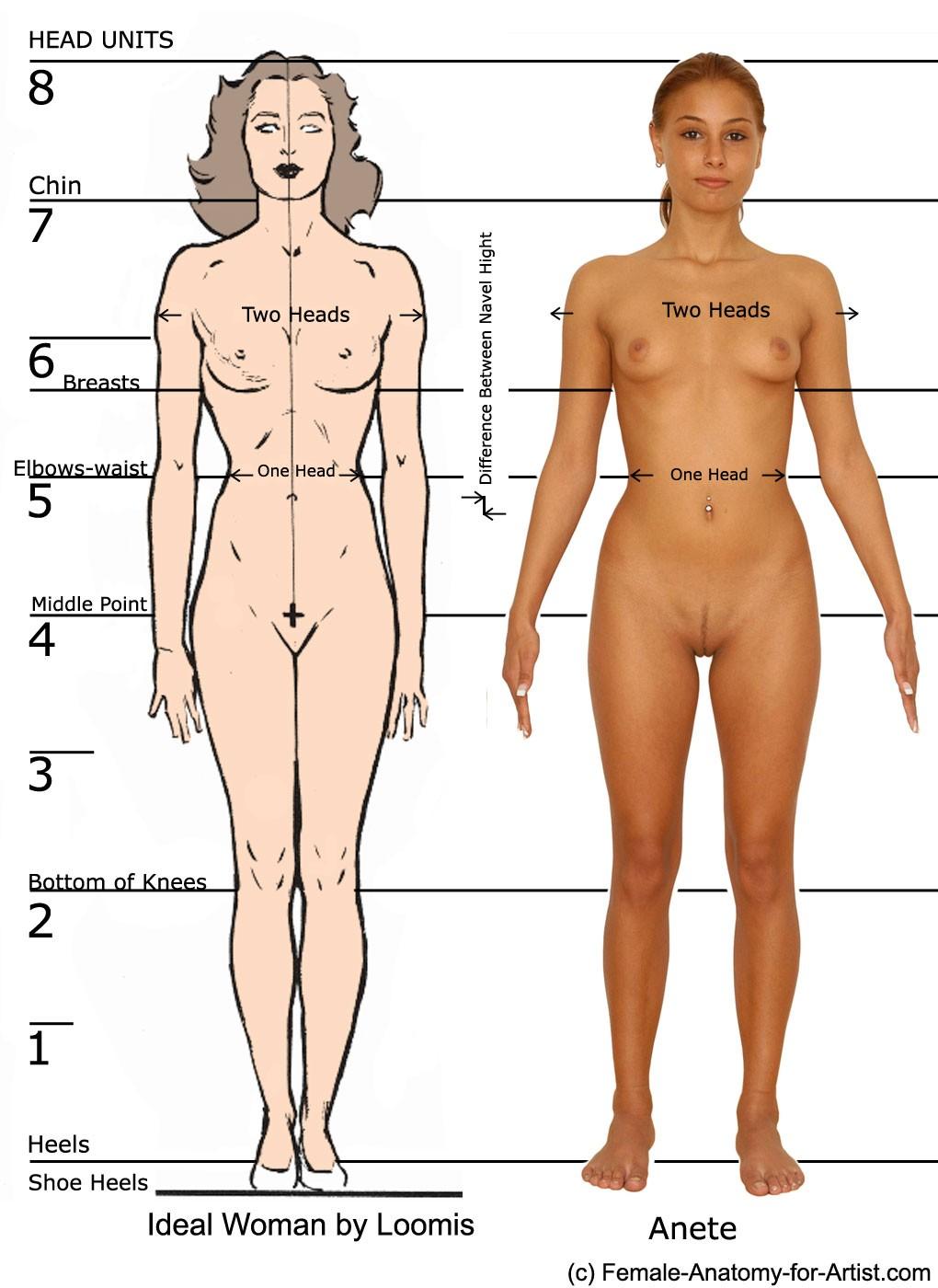 Lujoso La Práctica Anatomía Femenina Cresta - Imágenes de Anatomía ...