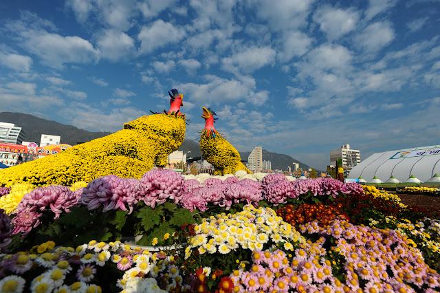 Фестивали цветов в японии фото