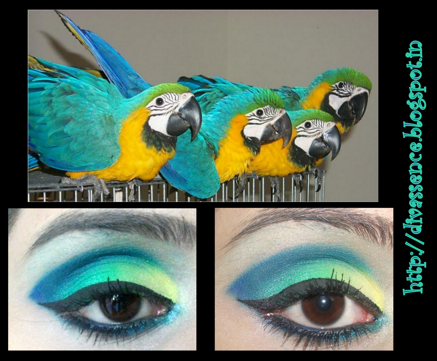 Blue Yellow Macaw Inspired Bright Eyemakeup Tutorial Divassence
