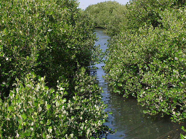 Wisata hutan mangrove atau hutan bakau obyek wisata ini terletak di