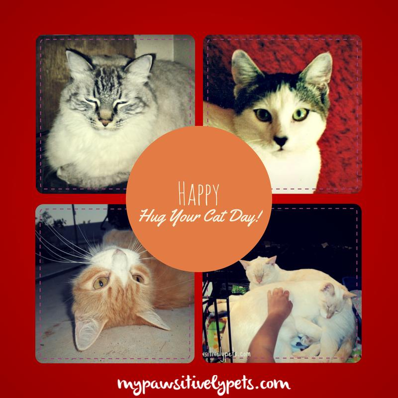 Happy Wednesday Cat Happy Hug Your Cat Day