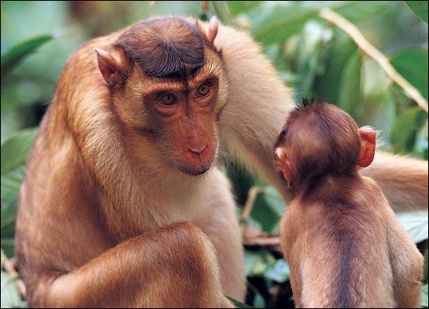 Monkey | Animal Wildlife