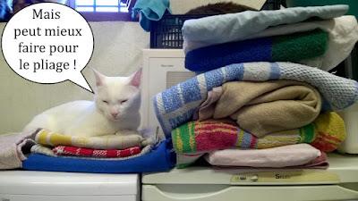 Un chat blanc et une pile de linge.